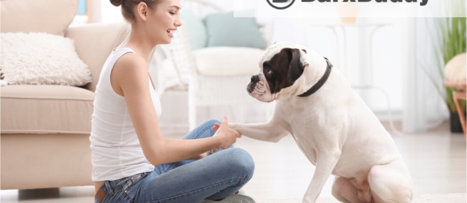 BarxBuddy Review: Is It Possible To Train Your Dog At Home?